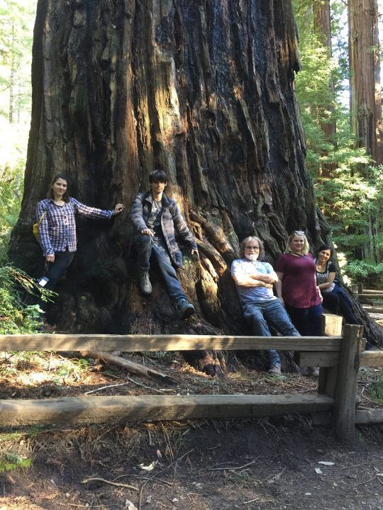 Drostle team in the Redwood Forest